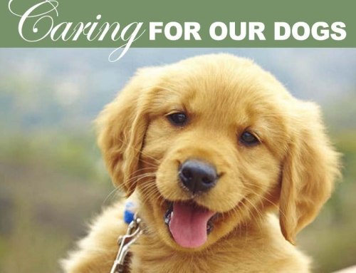 Caring For Our Dogs